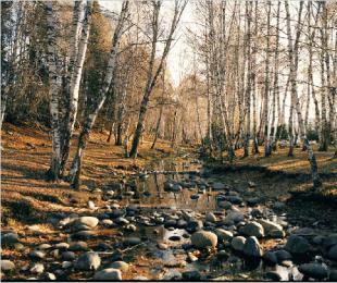 北疆的秋天